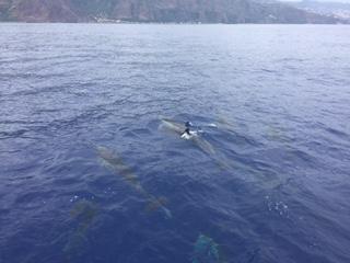 Dolphins Madeira Island
